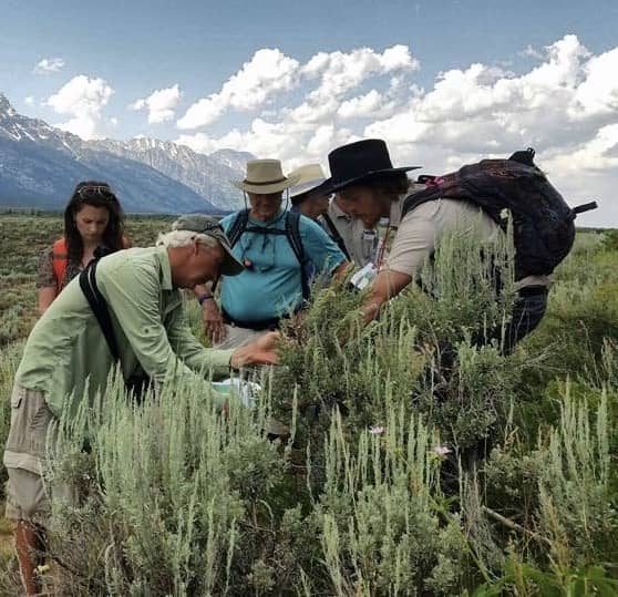 Projects - Phenology Shifts in the Tetons